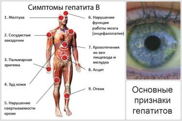 Профилактика гепатитов в республике беларусь thumbnail